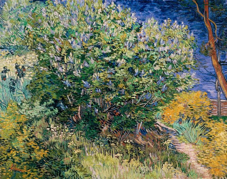 lilas-du-jardin-de-l-hopital_-_lilac-bush